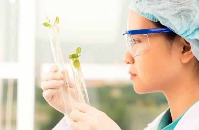 ¿Qué es la Biotecnología Agrícola?
