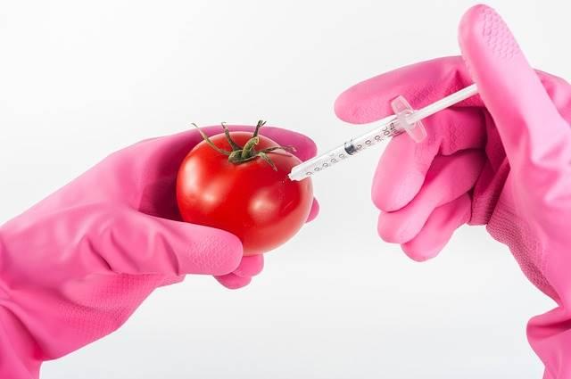 ¿Qué es la Biotecnología en Alimentos?