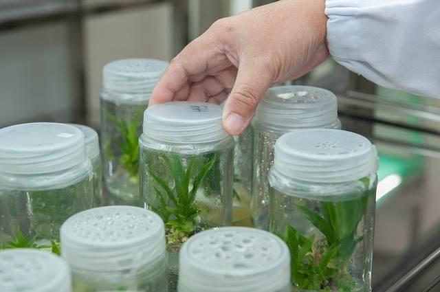 ¿Qué es la Biotecnología Vegetal?