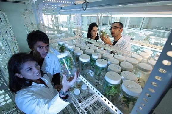¿Qué se la biotecnología gris?